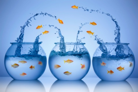 Goldfish jumping from three different bowls | Credit: Caroline Purser